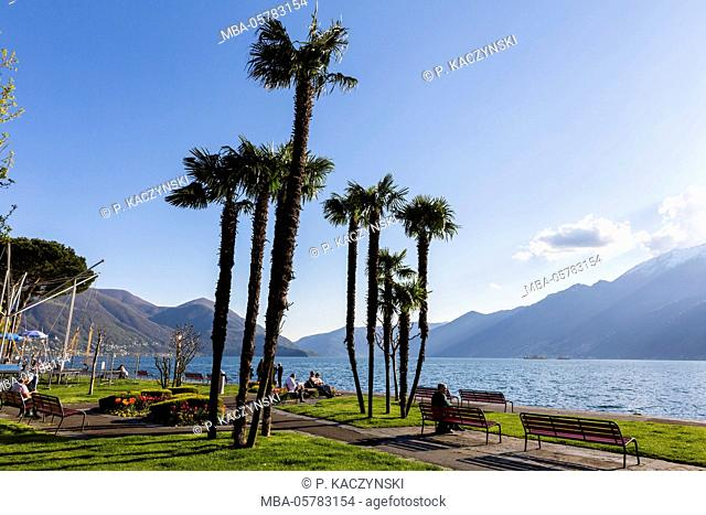 Park benches under Chinese windmill palm (Trachycarpus fortunei) at the Lago Maggiore, Ascona, Ticino, Switzerland, Alps