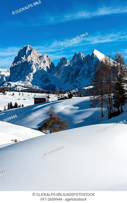 Alpe di Siusi/Seiser Alm, Dolomites, South Tyrol, Italy. Winter landscape on the Alpe di Siusi/Seiser Alm. In the background the peaks of Sassolungo/Langkofel...