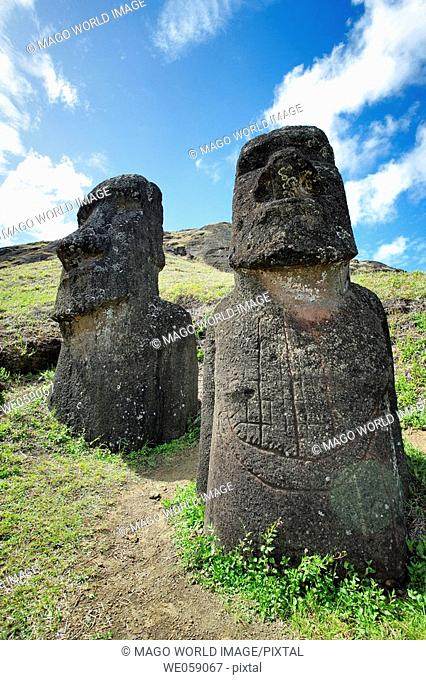 Chile, Easter Island, Rapa Nui, moai heads on the crater slopes of  Rano Raraku