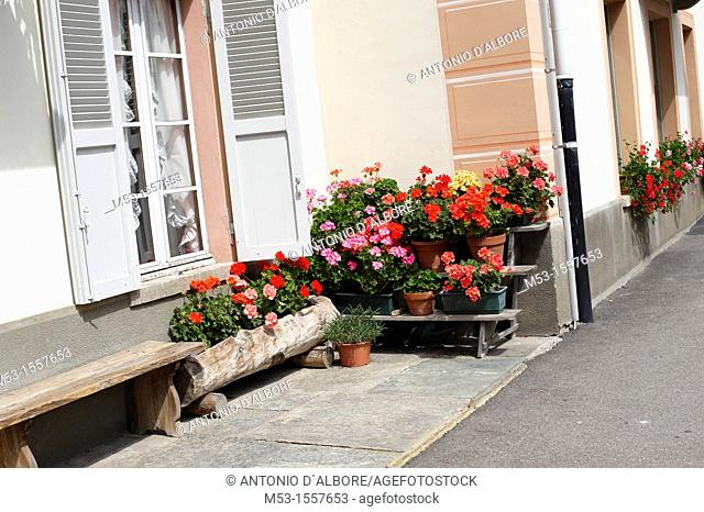 Potted flowering pelargonium outside an home in the village of Riva Valdobbia  Province of Vercelli  Piedmont  Italy