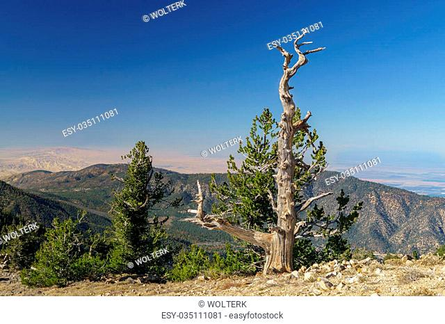 The summit of Mount Pinos at 8,847 feet (2,697 m) above sea level in southern California