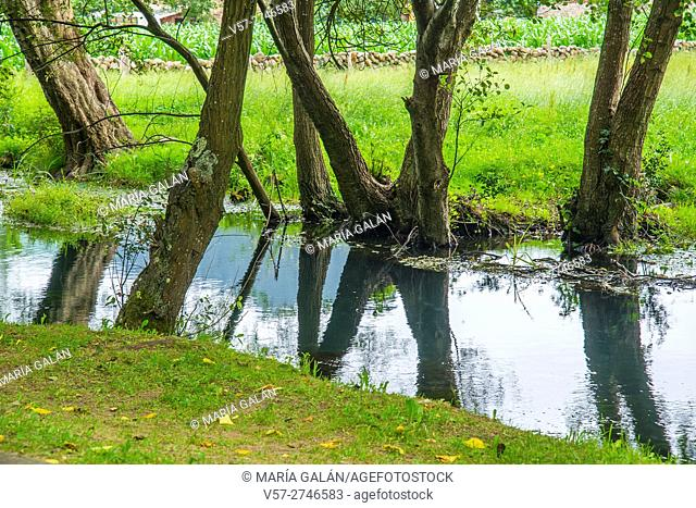 River La Fuentona and reflections of tree trunks. Ruente, Cantabria, Spain