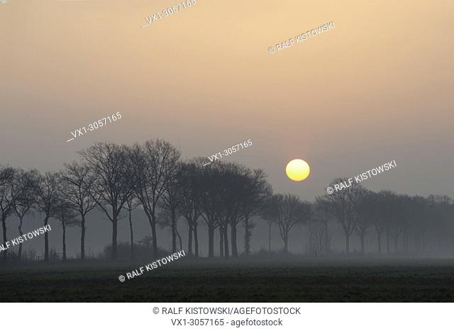 Atmospheric sunrise above a small rural avenue on a hazy morning somewhere in Germany
