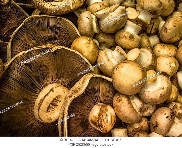 Display of mushrooms at a fresh produce market