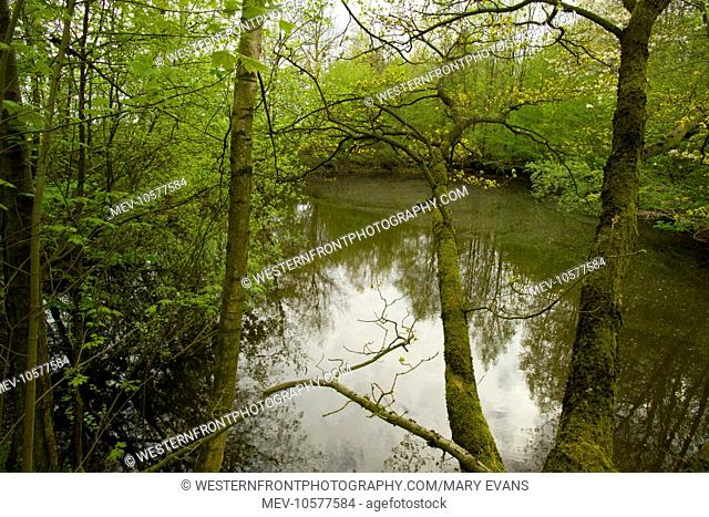 High Wood - flooded mine crater. Shown on maps as Bois de Foureaux, it was to be last of the major Somme woods to be captured