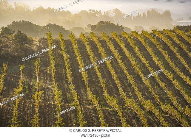 Vineyards producing organic wines in the Emporda region north of the Costa Brava in Catalonia Spain
