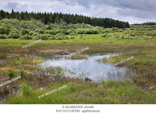 Moorland at the High Fens / Hautes Fagnes nature reserve in the Belgian Ardennes, Belgium