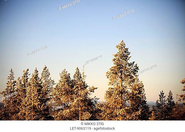 Wintery Lapland in Levi, Kittilä, Finland
