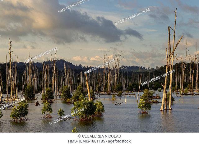 Indonesia, Sumatra Island, Aceh province, Calang, mangrove swamp after tsunami of December 2004