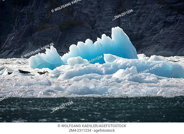 Backlit icebergs from LeConte Glacier drifting in LeConte Bay, Tongass National Forest, Southeast Alaska, USA