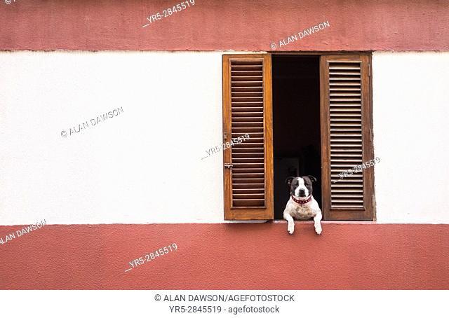 Dog looking out of window in La Isleta area of Las Palmas, Gran Canaria, Canary Islands, Spain