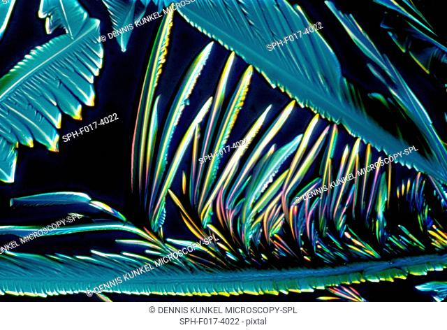Light micrograph (LM) of Vitamin C (ascorbic acid) crystals. Ascorbic acid is an organic acid found in citrus fruits and an antioxidant also known as vitamin C