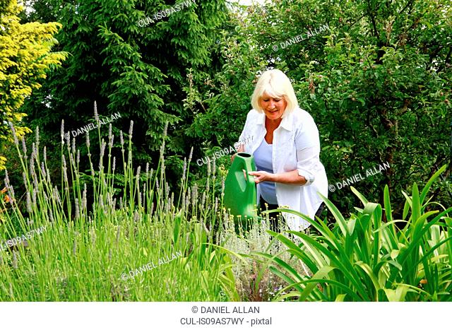 Senior woman water plants in garden with watering can