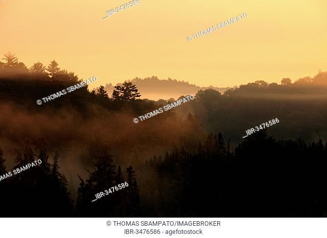 Sunrise over a forest, morning mist, Algonquin Provincial Park, Ontario Province, Canada