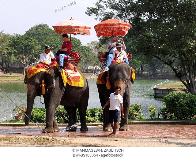 Asiatic elephant, Asian elephant (Elephas maximus), tourists on an elefant, Thailand