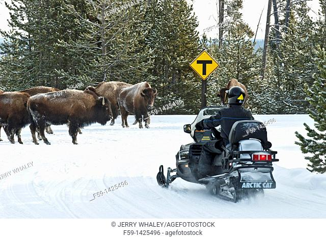 Bison & Snowmobiles, Winter, Yellowstone NP, WY