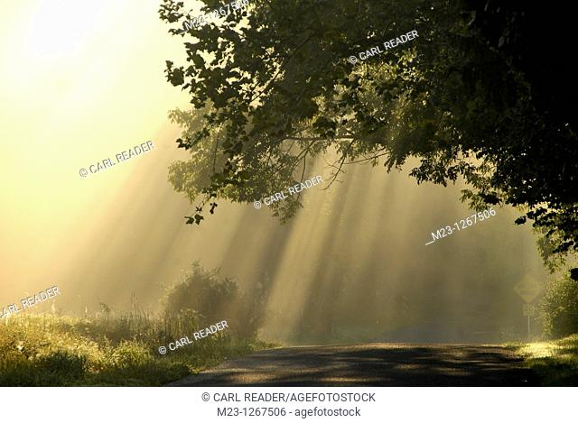 A tree arches over a road filled with sunlight and mist, Pennsylvania, USA