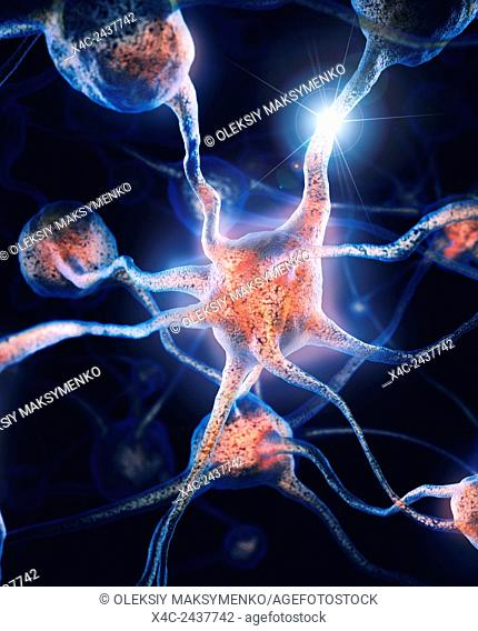 Network of neurons and neural connections, Brain cells, scientific illustration