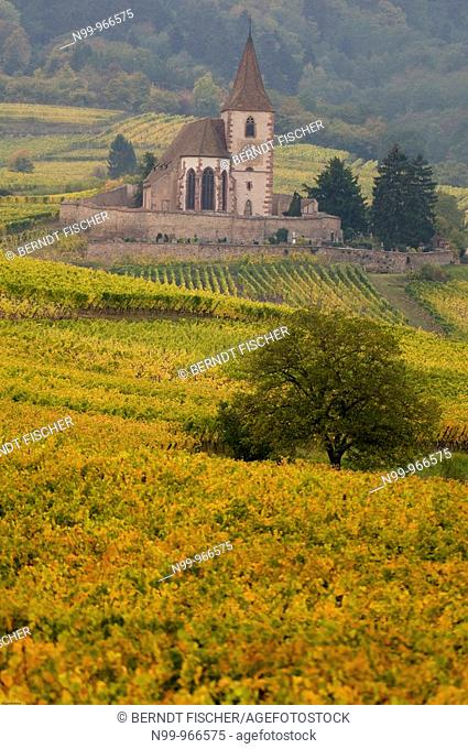 Hunawihr, fortified medieval church, vineyards on the hillsides of Vosges, colours of autumn, Alsace, France