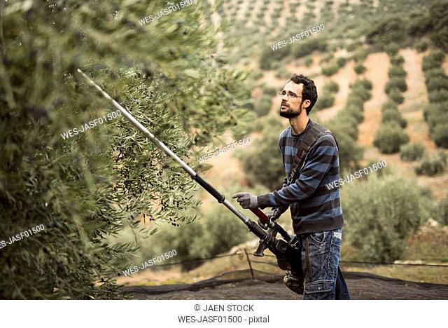 Spain, man working with vibrator in olive grove