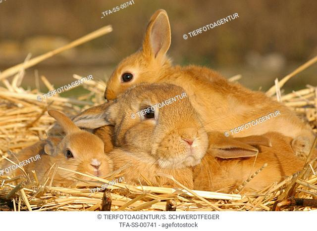 rabbit with babies