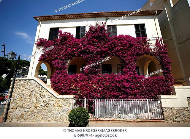 House overgrown with Bougainvillea, Costa Brava, Catalonia, Spain, Europe