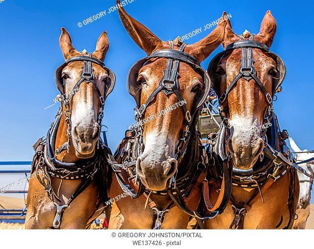Three horses appear to mug for the camera near Davenport, Washington
