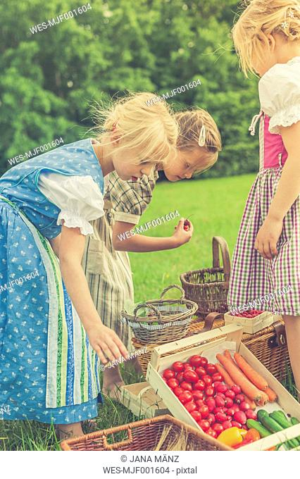 Germany, Saxony, three little girls in traditonal clothes with their harvest on a meadow