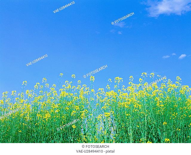 flower, sky, plant, nature, spring, film