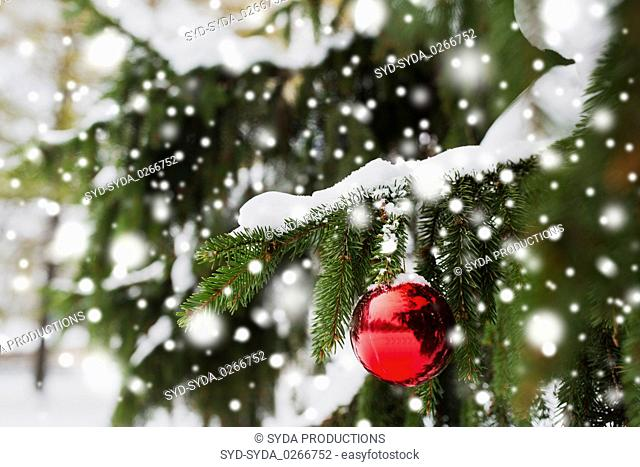 red christmas ball on fir tree branch with snow