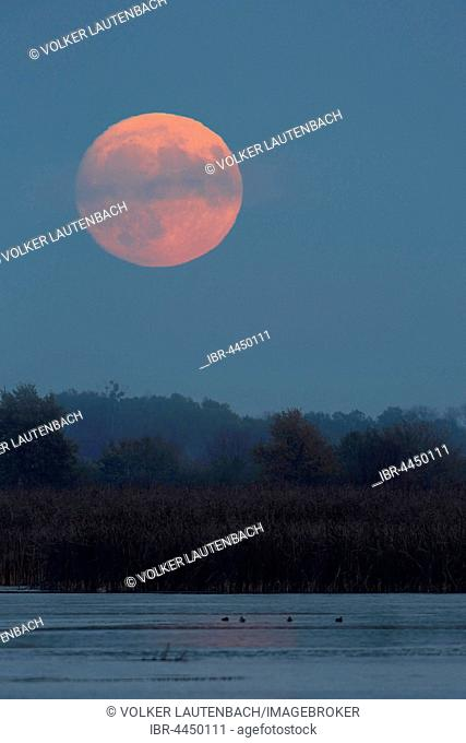 Red full moon over a lake, Middle Elbe Biosphere Reserve, Dessau, Saxony-Anhalt, Germany