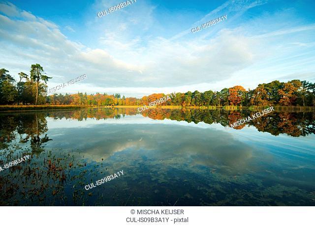 Autumn in woods, Breda, Netherlands
