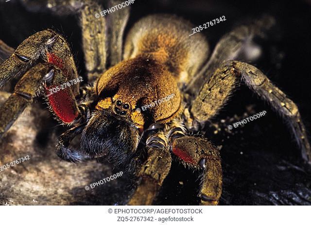 Spider. Arunachal Pradesh, India