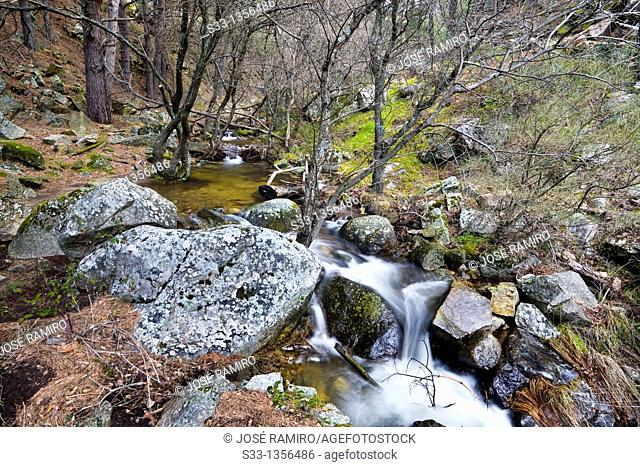 Hornillo stream in Robledondo  Madrid  Spain