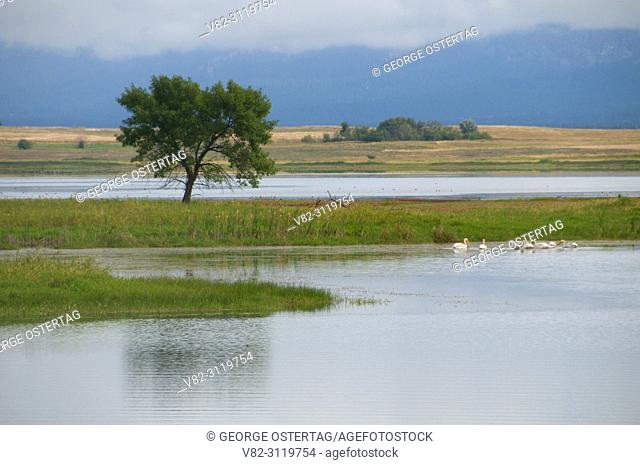 Ninepipe Reservoir wetland, Ninepipe National Wildlife Refuge, Montana