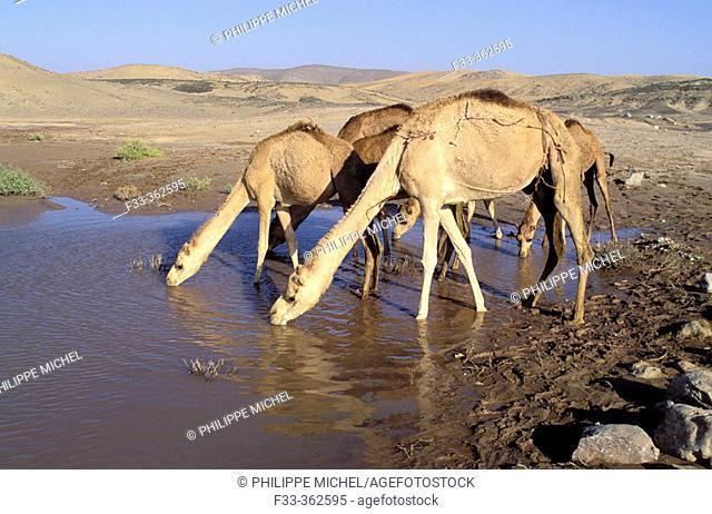 Wahibah desert. Oman