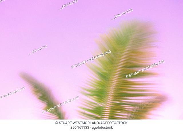 Palm trees at dawn. Marshall Islands