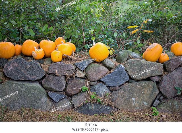 Pumpkins on a stone wall