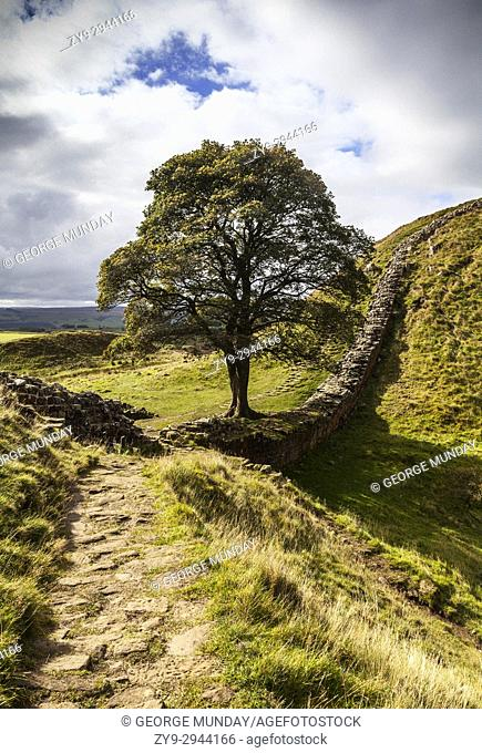 Below Winshields is the Sycamore Gap tree standing in a dramatic dip in Hadrian's Wall, a defensive fortification in the Roman province of Britannia