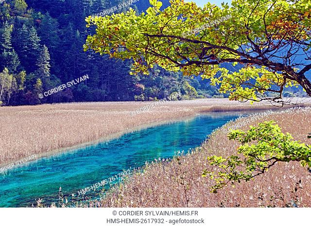 China, Sichuan province, Jiuzhaigou National Park listed as World Heritage by UNESCO, river coming from the Reed lake