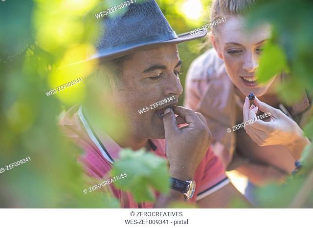 Man and woman in vineyard tasting grapes