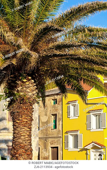 Palm tree, Susak Croatia