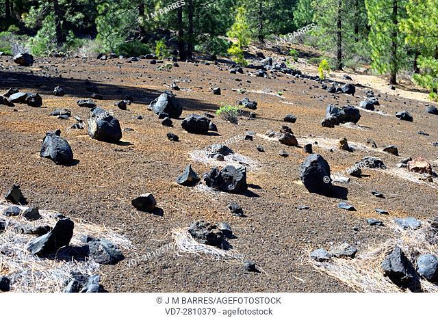 Volcanic bombs in Cumbre Vieja, La Palma Island; Canary Islands, Spain