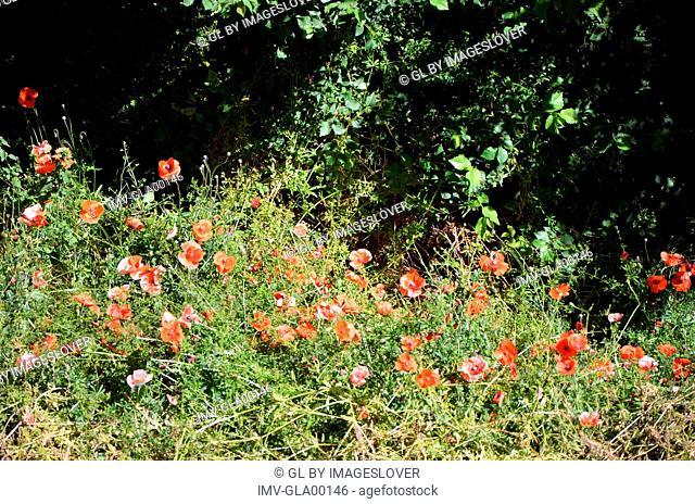 Flowers on Garden