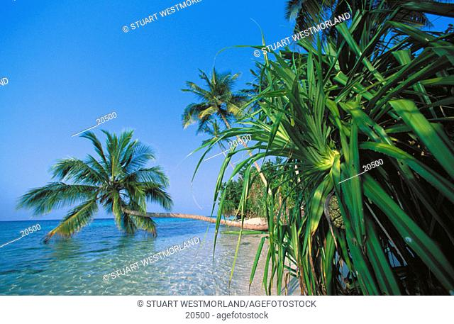 Felidu Atoll. Maldives