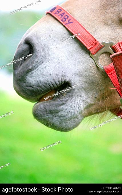 Tip of the nose of a horse