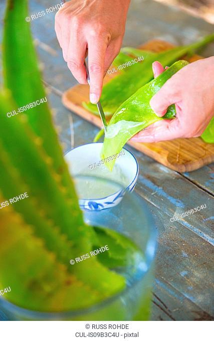 Female hand scraping liquid from aloe leaf in handmade soap workshop