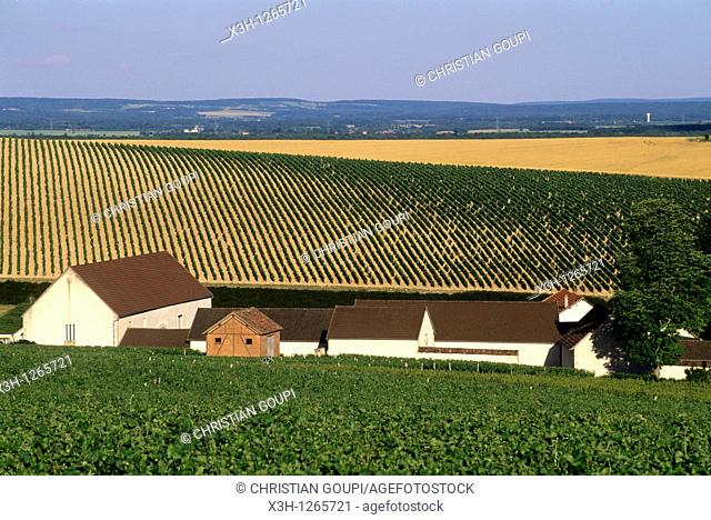the wine growing estate Ladoucette, Pouilly-sur-Loire, Nievre department, region of Burgundy, center of France, Europe