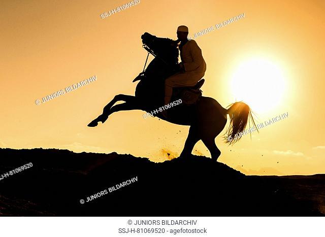 Arabian Horse. Rider on black stallion galloping in the desert, silhouetted against the setting sun. Egypt