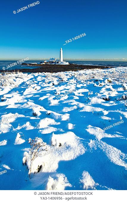 England, Tyne and Wear, St Mary's Island and Lighthouse  Snow covered Tussock grass on the North Tyneside coast near the city of Newcastle Upon Tyne